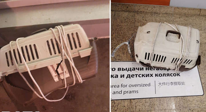 Две кошки погибли от травм при транспортировке в российский аэропорт