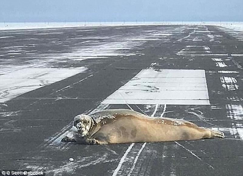Животное не пускало самолет из Анталии в Черновцы