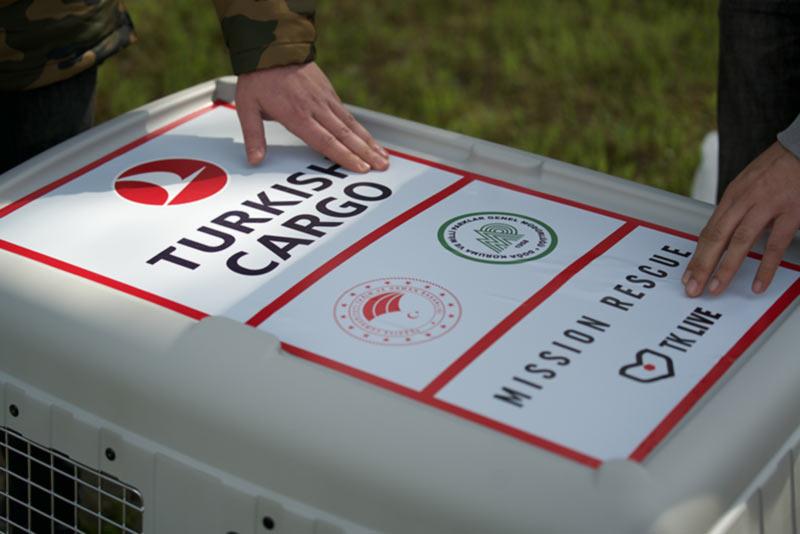 Turkish Cargo спасла жизнь белоголового сипа