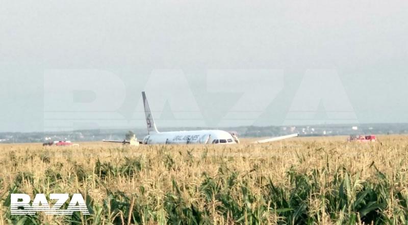 Самолет сел на кукурузное поле в России