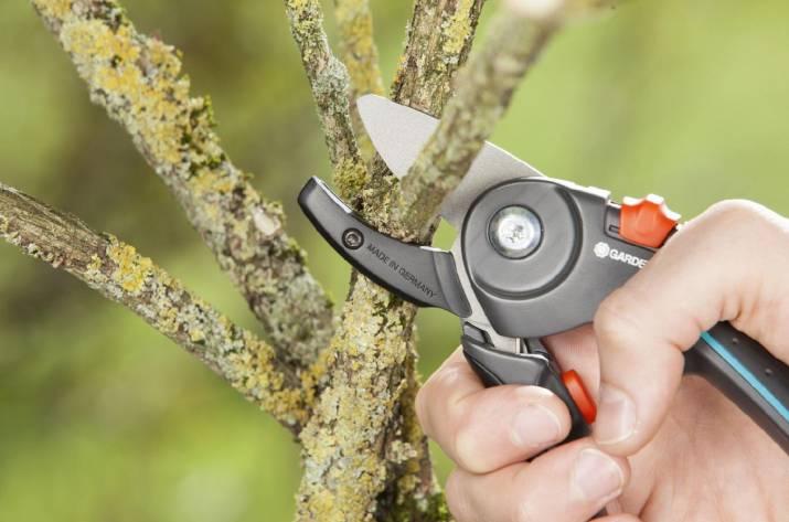 Какой инструмент понадобится для ухода за садом